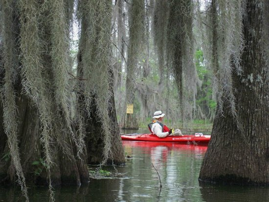 Breaux Bridge, LA: Exploring mystical Lake Martin