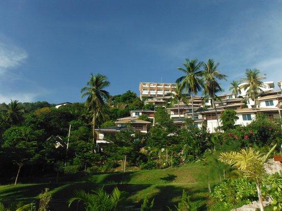 Pinnacle Koh Tao Resort: มุมมองจากสระว่ายน้ำขึ้นไปยังตัวโรงแรม