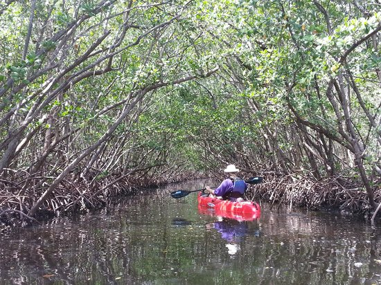 Kayak Excursions: in the groves