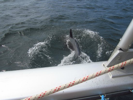 Nica Sail and Surf: Dolphins swimming with the boat!