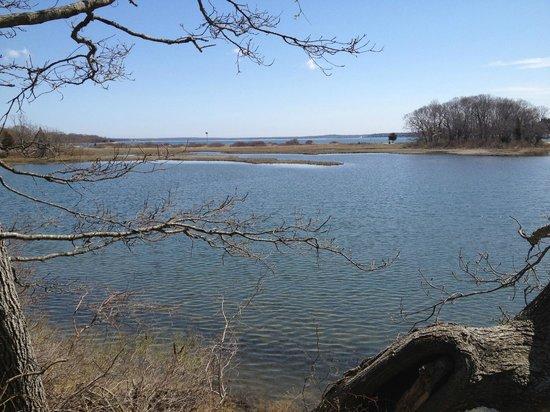Mashomack Preserve: Red Trail View
