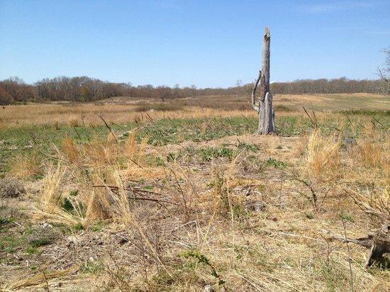 Mashomack Preserve: Yellow Trail Meadow
