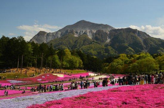 Hitsujiyama Park: 武甲山とハート型の芝桜