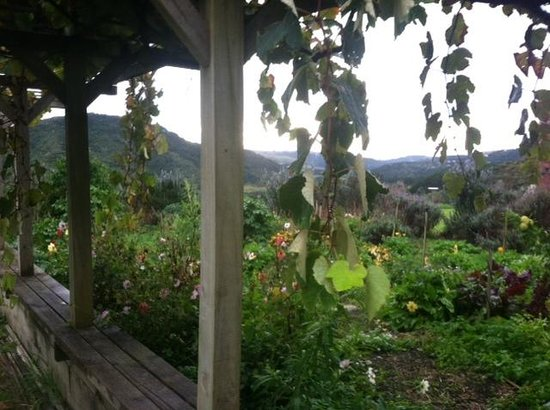 Bethells Beach Cottages: Beautiful grounds