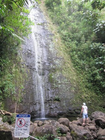 Manoa Falls : April 17th 2013