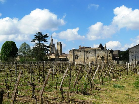 Chateau Villemaurine : View of village of Saint Emilion from the vineyard