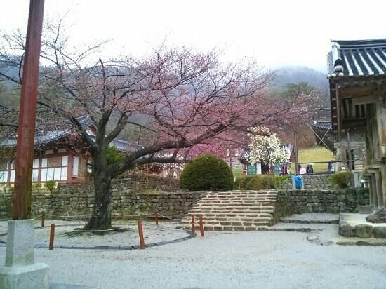 Buan-gun, Sør-Korea: 내소사 Naesosa Temple