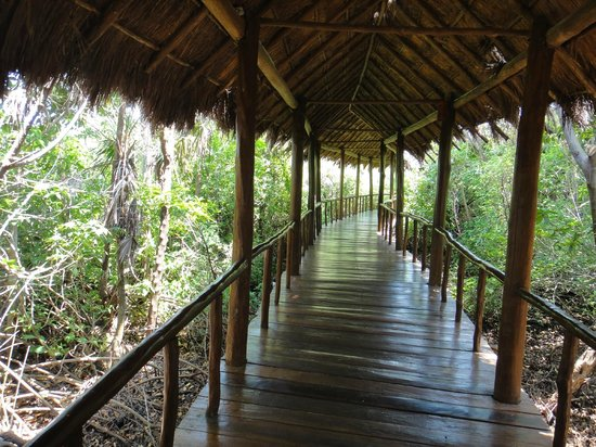 Grand Palladium Riviera Resort & Spa : walkway through the mangroves