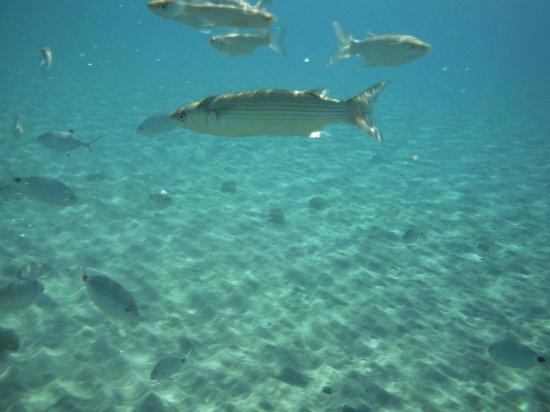 Olympia Mare: Sea - Fish