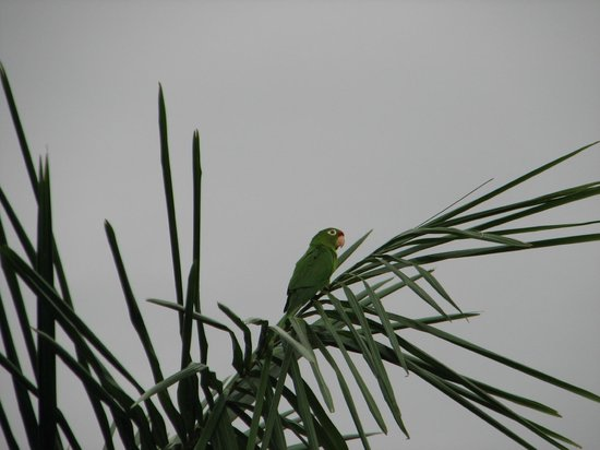 Costa Rica Marriott Hotel San Jose: Parrots Outside our Room