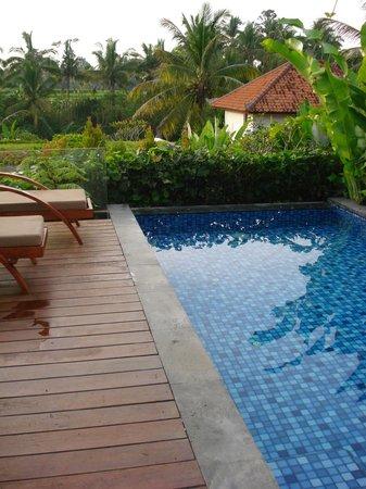 Ubud Green: private useless pool