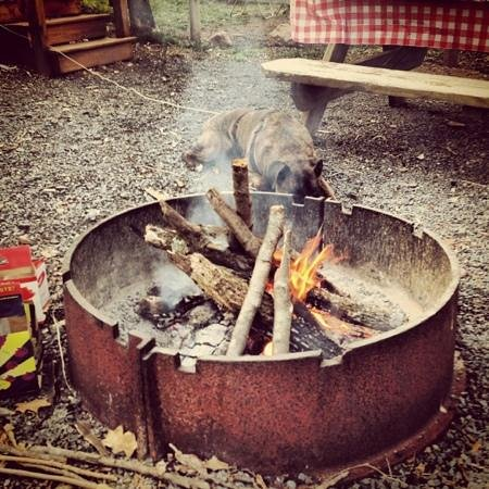 Twin Grove RV Resort & Cottages : fire ring