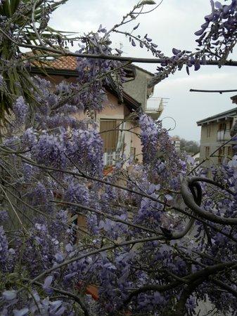 Il Ritrovo Delle Volpi: Glicine e stanza primavera