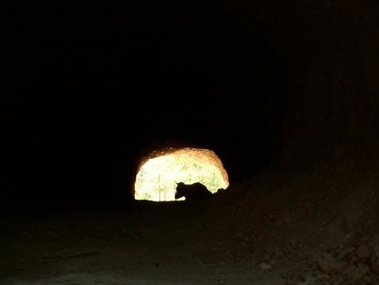 Tran, Bułgaria: his cow was keeping cool in the tunnel