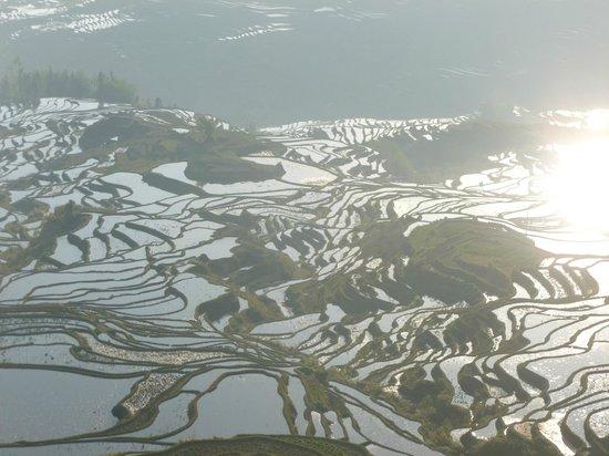 Yuanyang Pengtian: Titian / Rice terrace