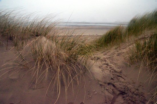 Brynarth Country Guest House: Ynyslas Dunes