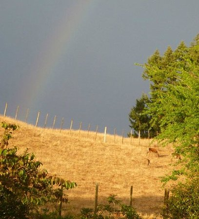Hunts Farm: rainbow over deer