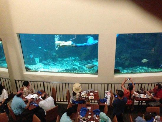 Pacific Beach Hotel Waikiki Aquarium The Best Beaches In World