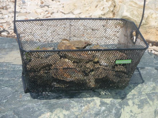 Pierre & Vacances Residenz Le Palais des Gouverneurs: Récolte d'huîtres