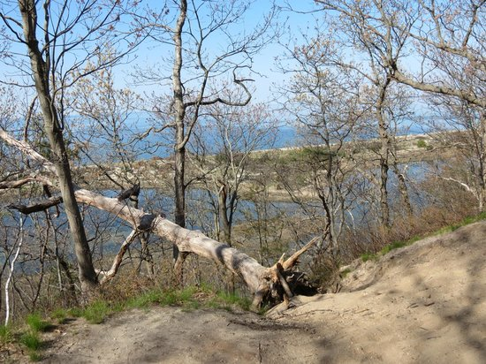 Sunken Meadow State Park: Sunken Meadow, trail view