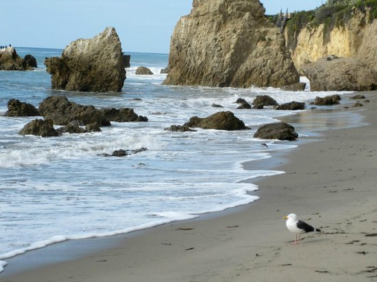 El Matador State Beach: Wildlife :)