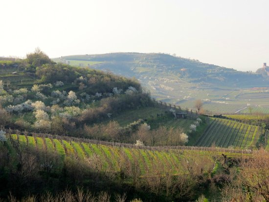 Agriturismo Libero: view from the B&B