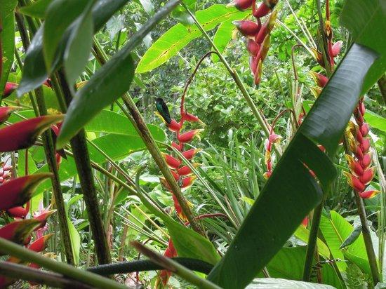 De superbes fleurs dans le parc picture of les jardins for Fleurs dans le jardin