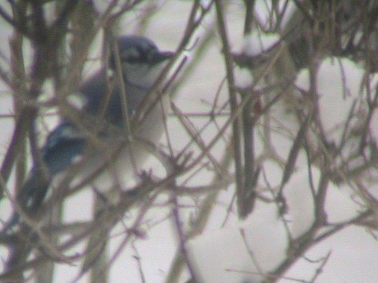 Emerson Guest House: A blue jay sits outside the Willard Suite window.