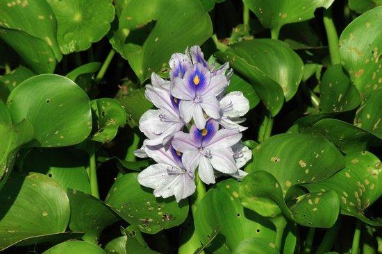 Paynes Prairie Preserve State Park: flower