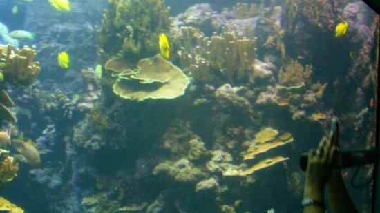 Ocean Activities Center: reef
