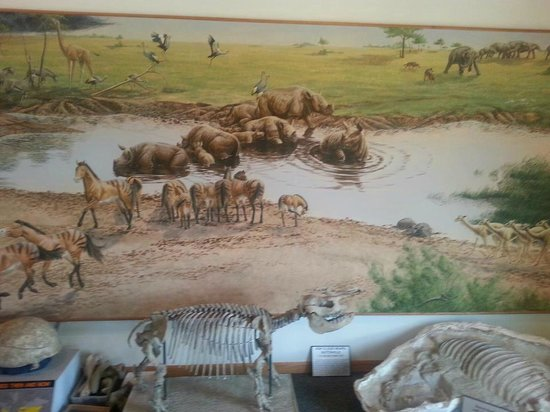 Ashfall Fossil Beds State Historical Park: Mural at Visitor's Center of types of animals found here, in a natural setting