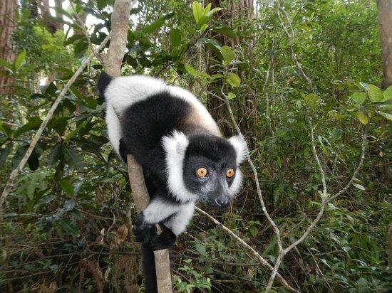 Vakona Private Reserve: Lemur Island