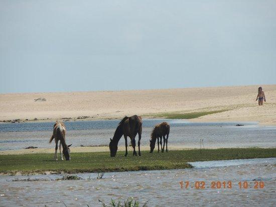 Barra De Punau : Fazenda, rio e mar.