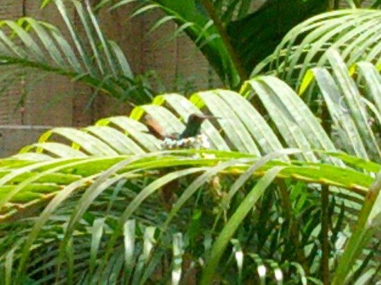 Coconut Love Beach House : Kolibrinest direkt vor dem Balkon