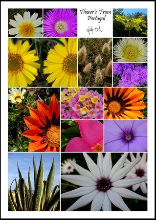 Hotel Avenida Praia: The Flowers of Algarve