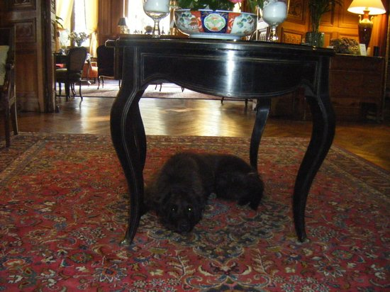 Chateau de Verrieres: Uno in his usual spot