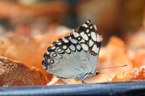 Reiman Gardens: Butterfly house
