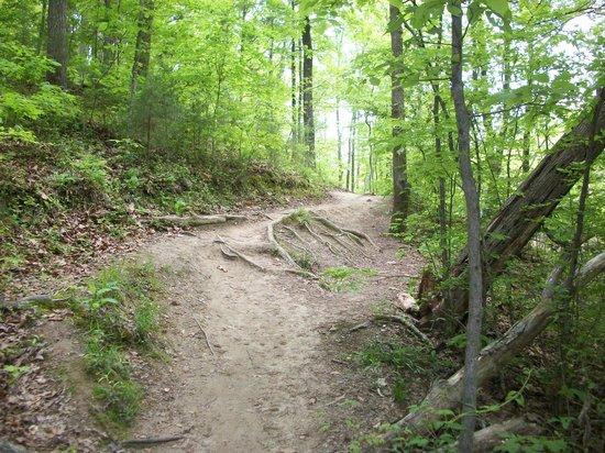 Big Rock Nature Preserve Charlotte Nc