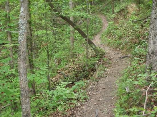 McDowell Nature Center and Preserve: Chestnut Trail, McDowell Nature Preserve