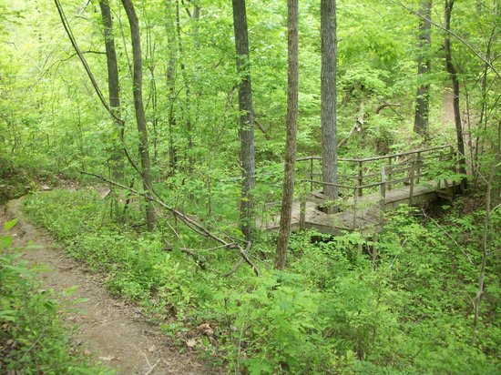 McDowell Nature Center and Preserve: Shady Hollow Trail, McDowell Nature Preserve