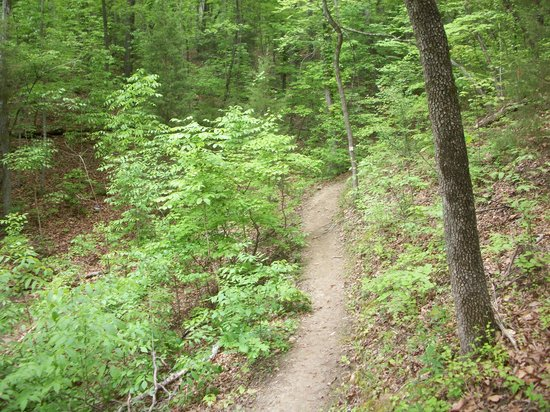 McDowell Nature Center and Preserve : Chestnut Trail, McDowell Nature Preserve