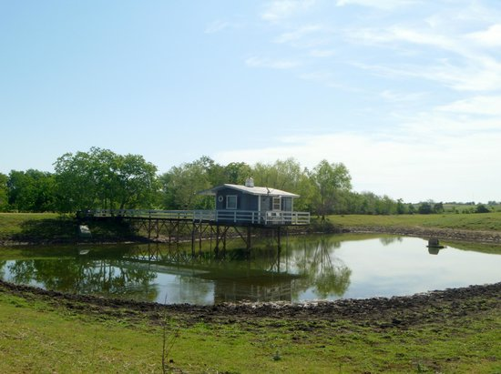 Cedars Cabins : fishing cabin on the pond