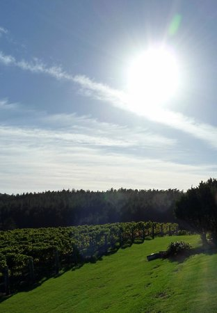 Ti Point Retreat: Sun across the vines from the deck