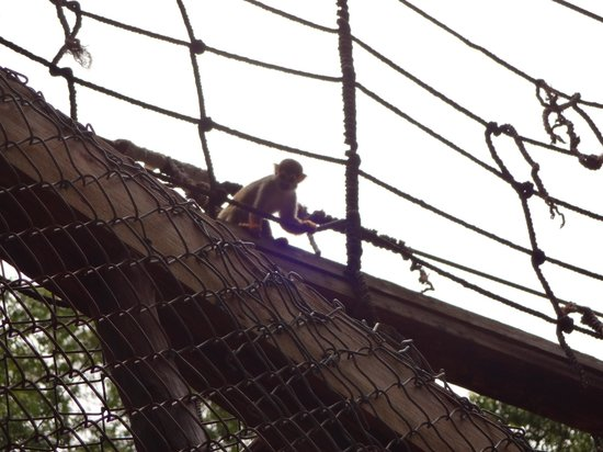 Monkey Jungle and Zip Line Adventures: monkey jungle