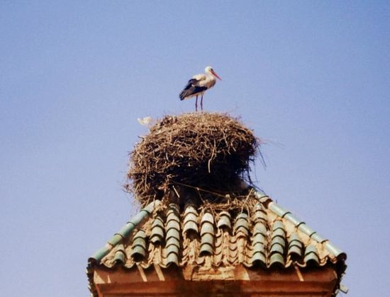 Dar Les Cigognes: Stork's nests - viewed from the terrace