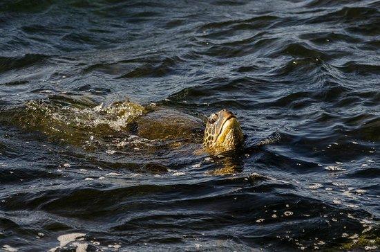 منتجع نولاني كوندومينيم: Sea Turtle