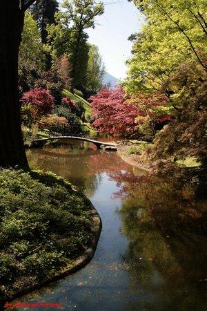 i Giardini di Villa Melzi : laghetto orientale