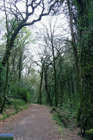 The Towers: Woodland trail