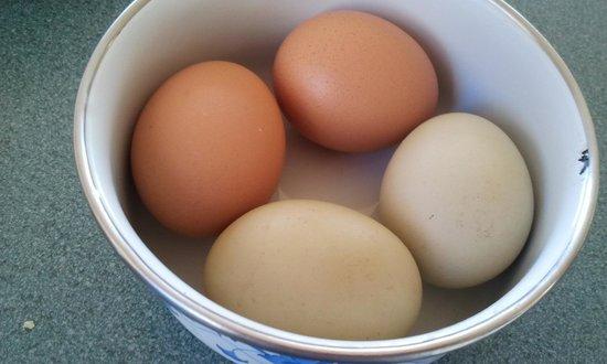 Duckmaloi Farm: The fresh eggs