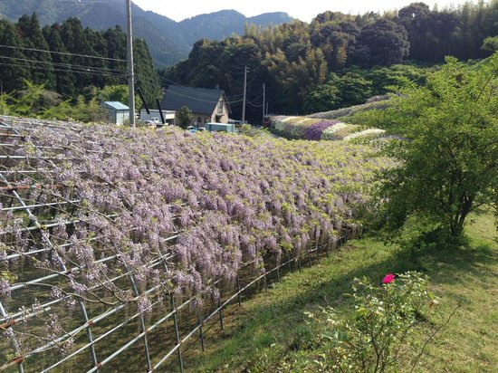 Kitakyushu City Kawachi Fuji Garden Wisterias Blossom Japan Top Tips Before You Go Tripadvisor